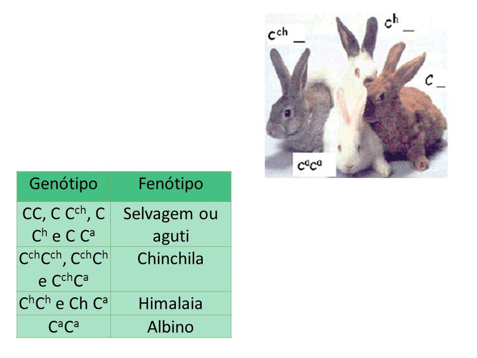 Genótipo Fenótipo CC, C Cch, C Ch e C Ca Selvagem ou aguti