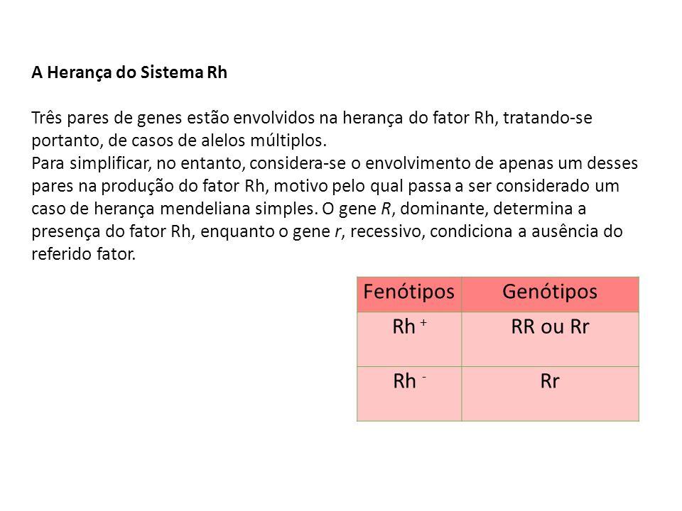 Fenótipos Genótipos Rh + RR ou Rr Rh - Rr A Herança do Sistema Rh