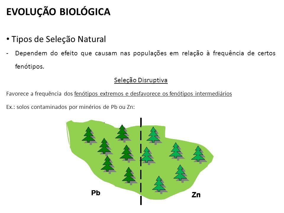 EVOLUÇÃO BIOLÓGICA Tipos de Seleção Natural
