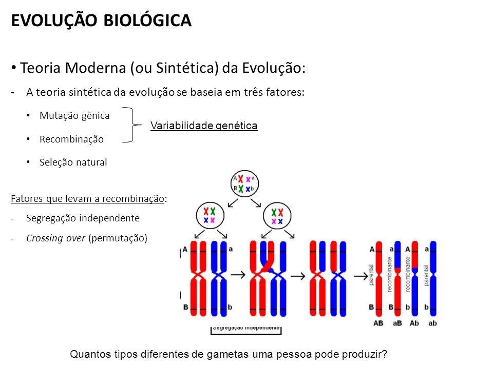 EVOLUÇÃO BIOLÓGICA Teoria Moderna (ou Sintética) da Evolução: