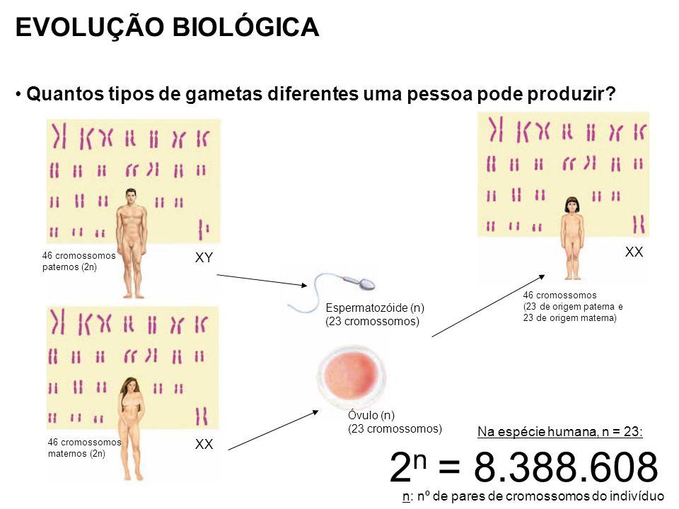 EVOLUÇÃO BIOLÓGICA Quantos tipos de gametas diferentes uma pessoa pode produzir 46 cromossomos. paternos (2n)