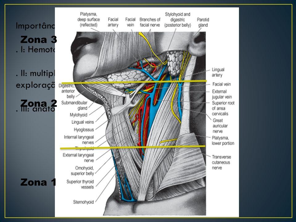 Importância das regiões anatômicas: