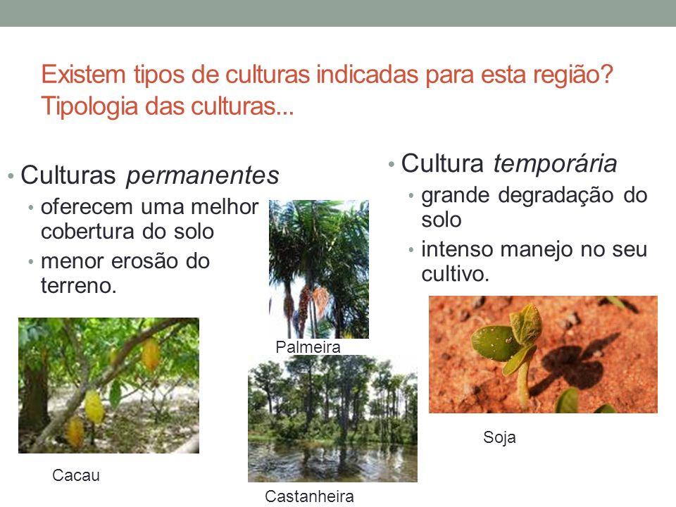 Existem tipos de culturas indicadas para esta região