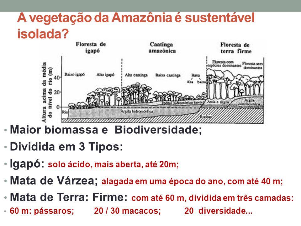 A vegetação da Amazônia é sustentável isolada