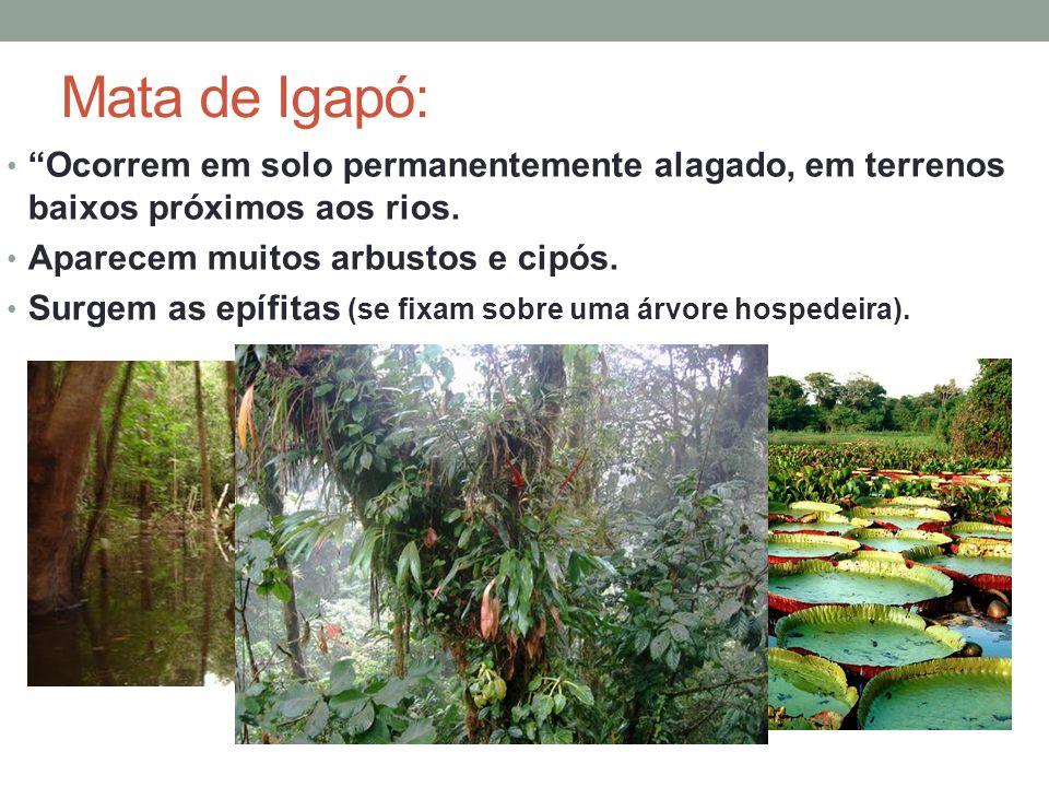 Mata de Igapó: Ocorrem em solo permanentemente alagado, em terrenos baixos próximos aos rios. Aparecem muitos arbustos e cipós.