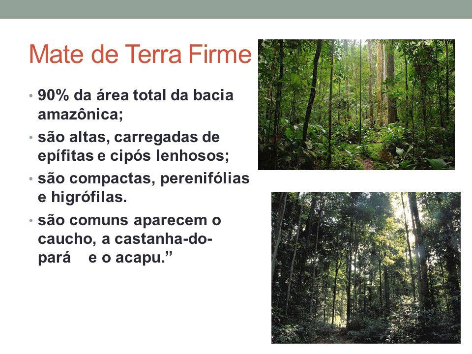 Mate de Terra Firme 90% da área total da bacia amazônica;