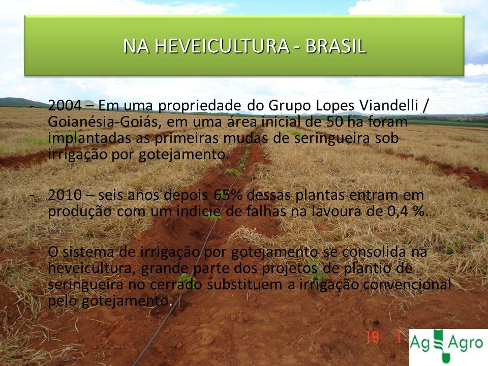 NA HEVEICULTURA - BRASIL