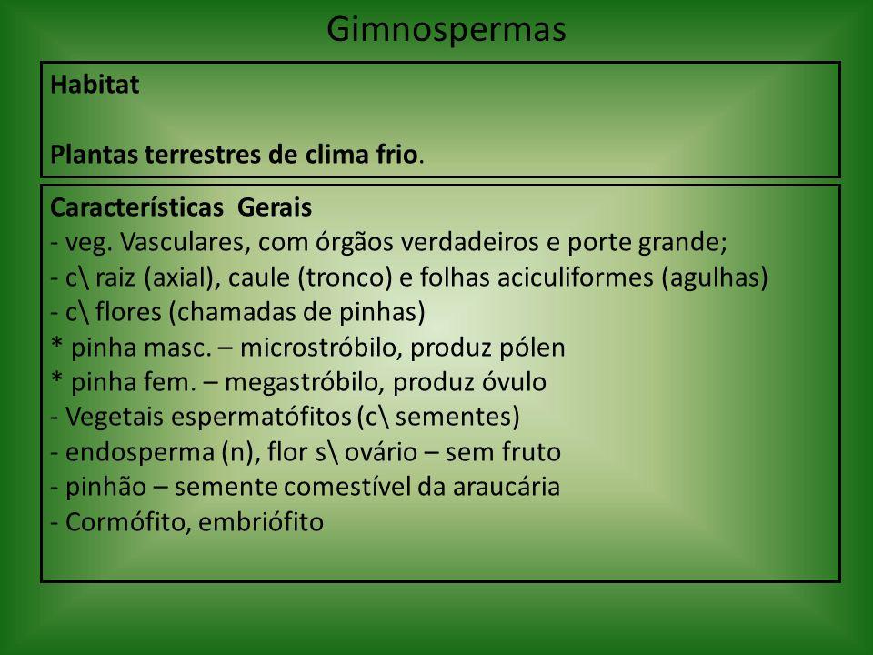 Gimnospermas Habitat Plantas terrestres de clima frio.