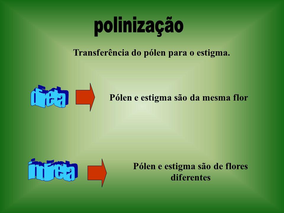 polinização direta indireta Transferência do pólen para o estigma.