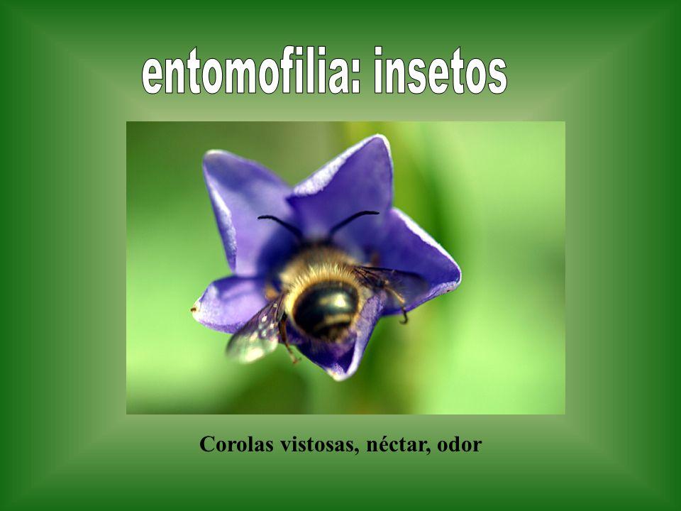 Corolas vistosas, néctar, odor
