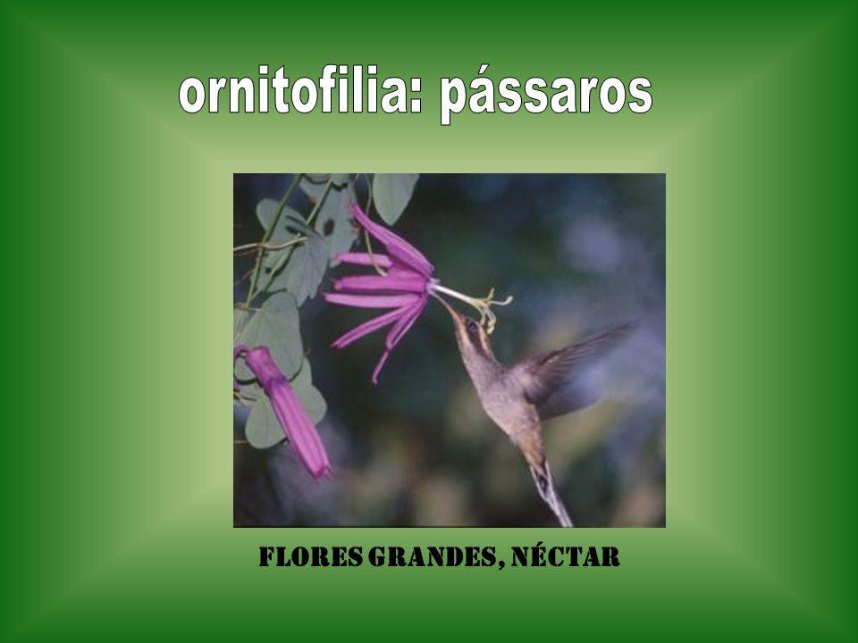 ornitofilia: pássaros