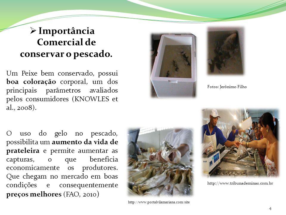 Importância Comercial de conservar o pescado.