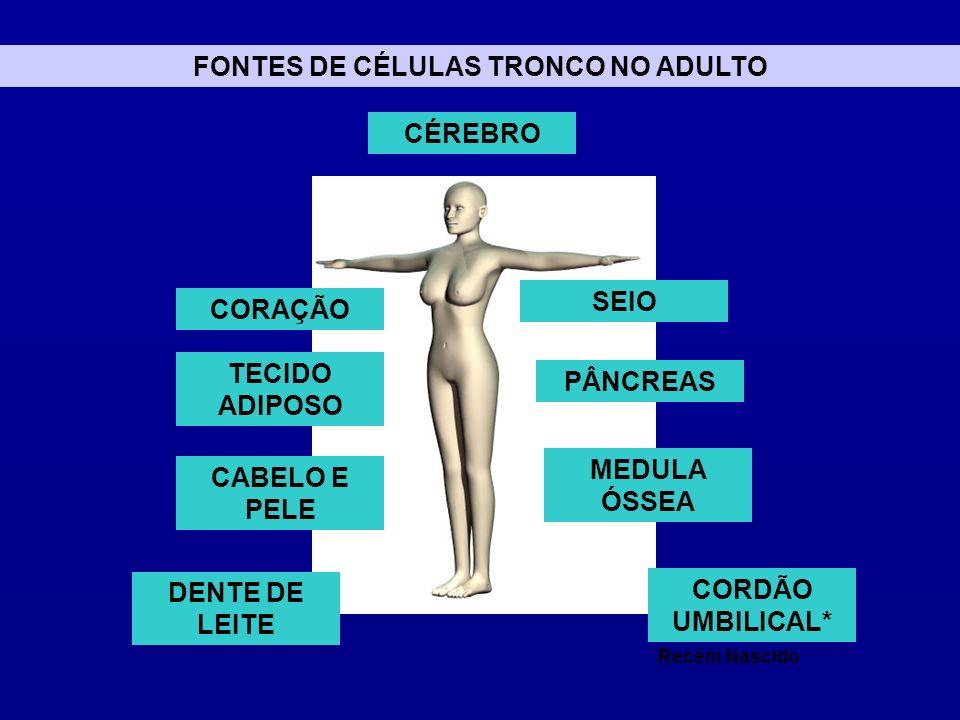 FONTES DE CÉLULAS TRONCO NO ADULTO