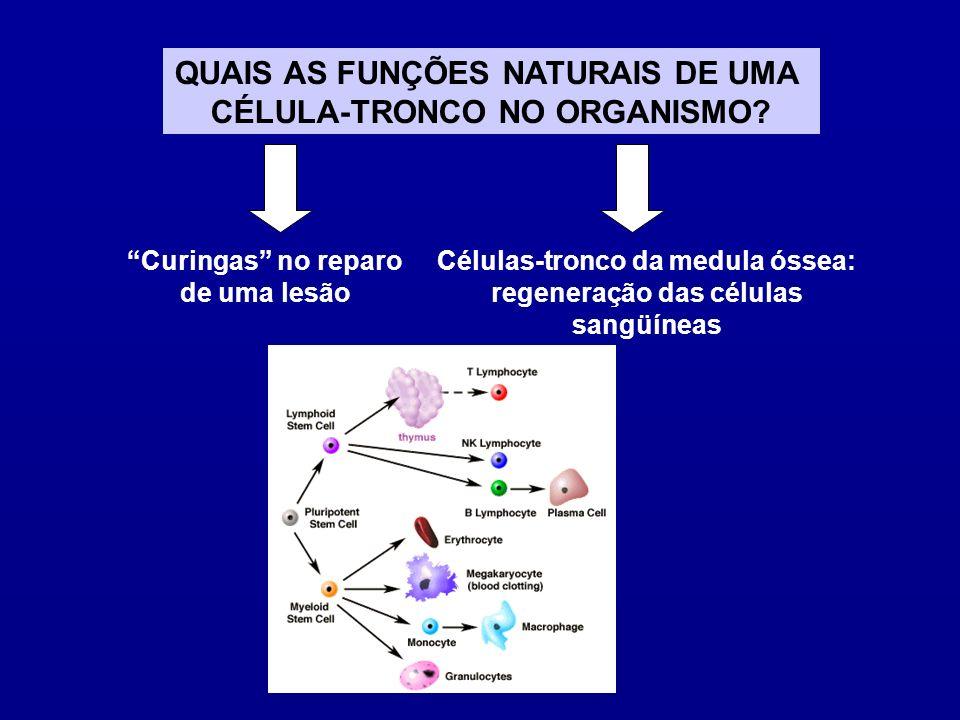QUAIS AS FUNÇÕES NATURAIS DE UMA CÉLULA-TRONCO NO ORGANISMO
