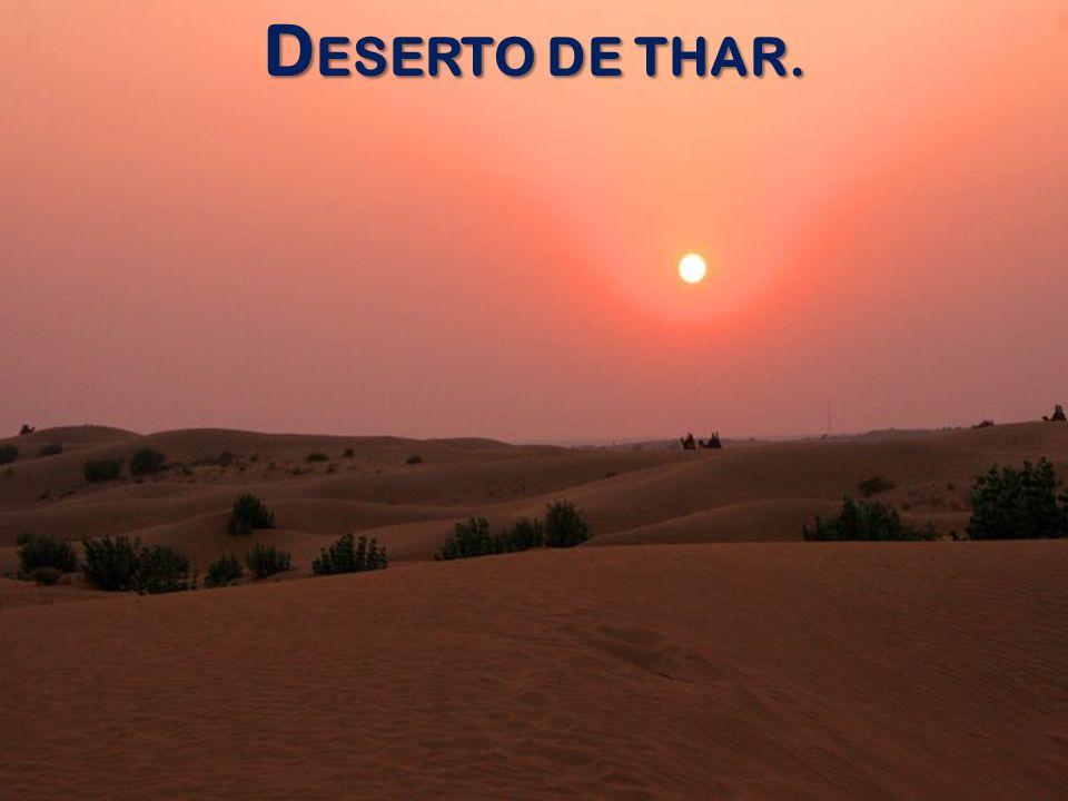 DESERTO DE THAR.