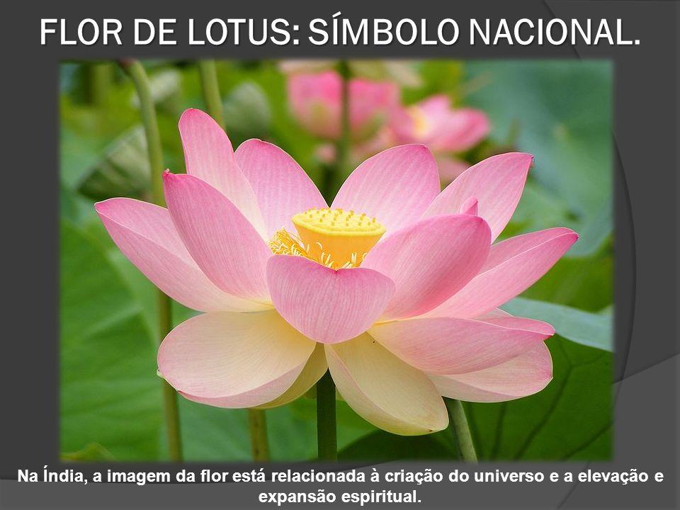 FLOR DE LOTUS: SÍMBOLO NACIONAL. INDIANO