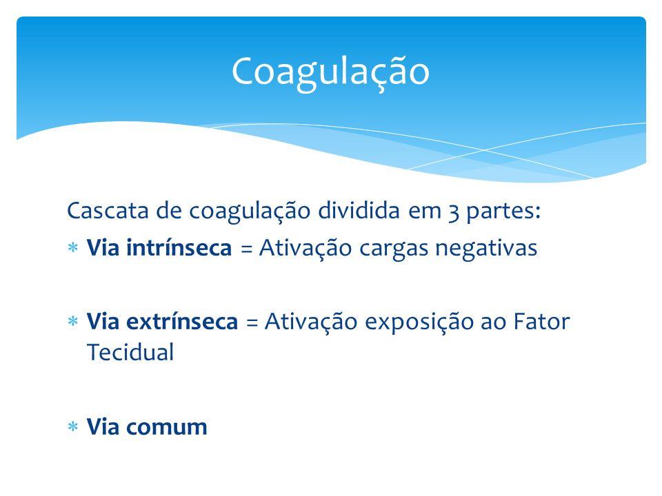 Coagulação Cascata de coagulação dividida em 3 partes: