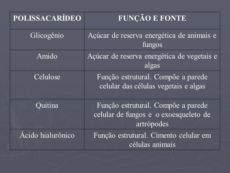 POLISSACARÍDEO FUNÇÃO E FONTE