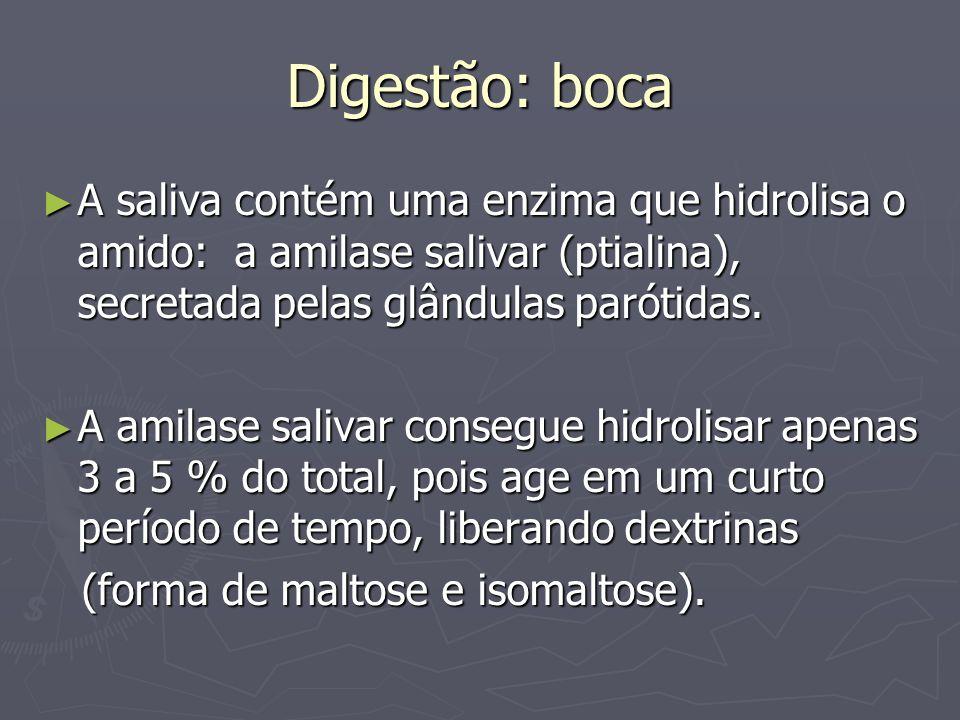 Digestão: boca A saliva contém uma enzima que hidrolisa o amido: a amilase salivar (ptialina), secretada pelas glândulas parótidas.