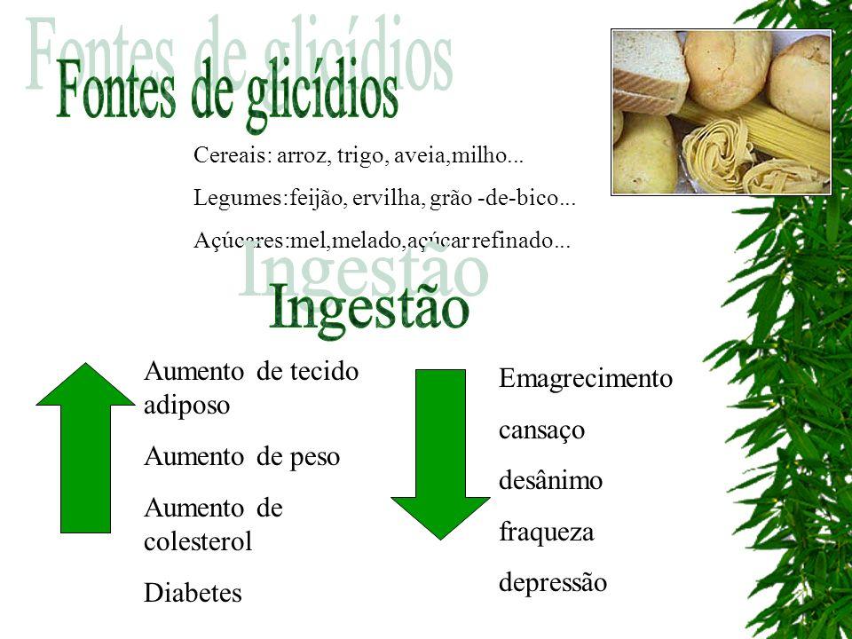 Fontes de glicídios Ingestão Aumento de tecido adiposo Emagrecimento