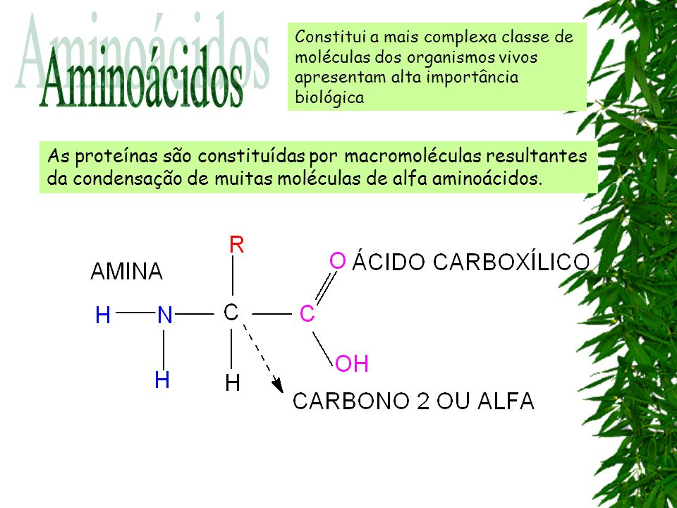 Constitui a mais complexa classe de moléculas dos organismos vivos apresentam alta importância biológica