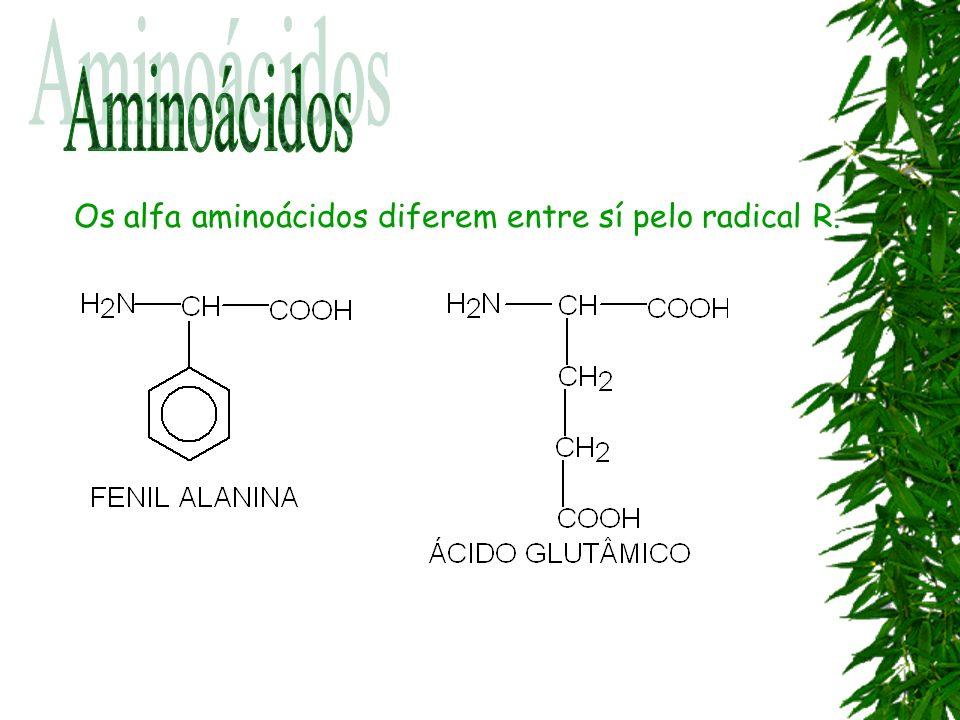 Aminoácidos Os alfa aminoácidos diferem entre sí pelo radical R.