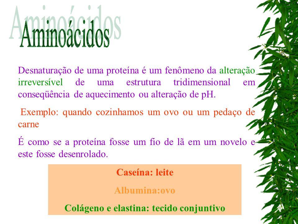 Colágeno e elastina: tecido conjuntivo