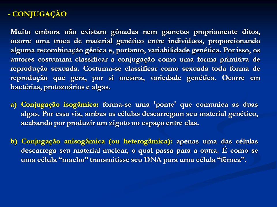 - CONJUGAÇÃO