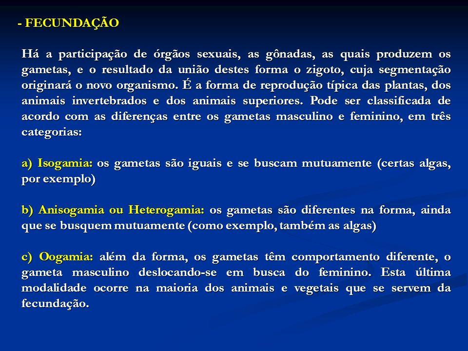 - FECUNDAÇÃO