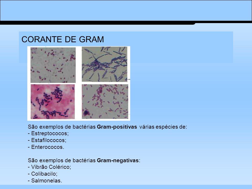 CORANTE DE GRAM
