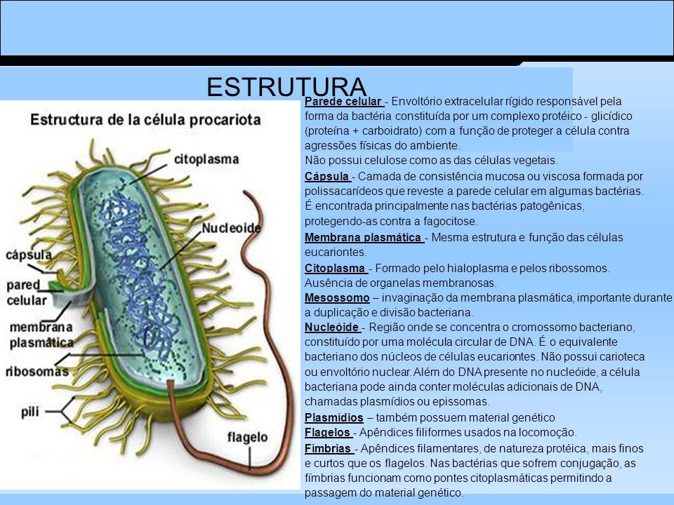 ESTRUTURA Parede celular - Envoltório extracelular rígido responsável pela. forma da bactéria constituída por um complexo protéico - glicídico.