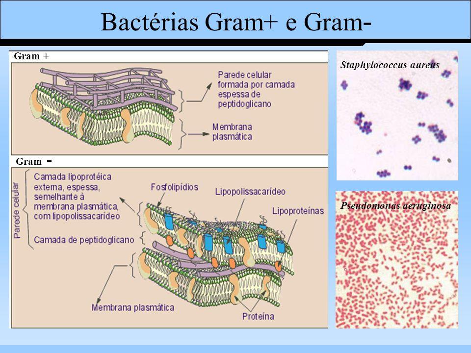 Bactérias Gram+ e Gram-