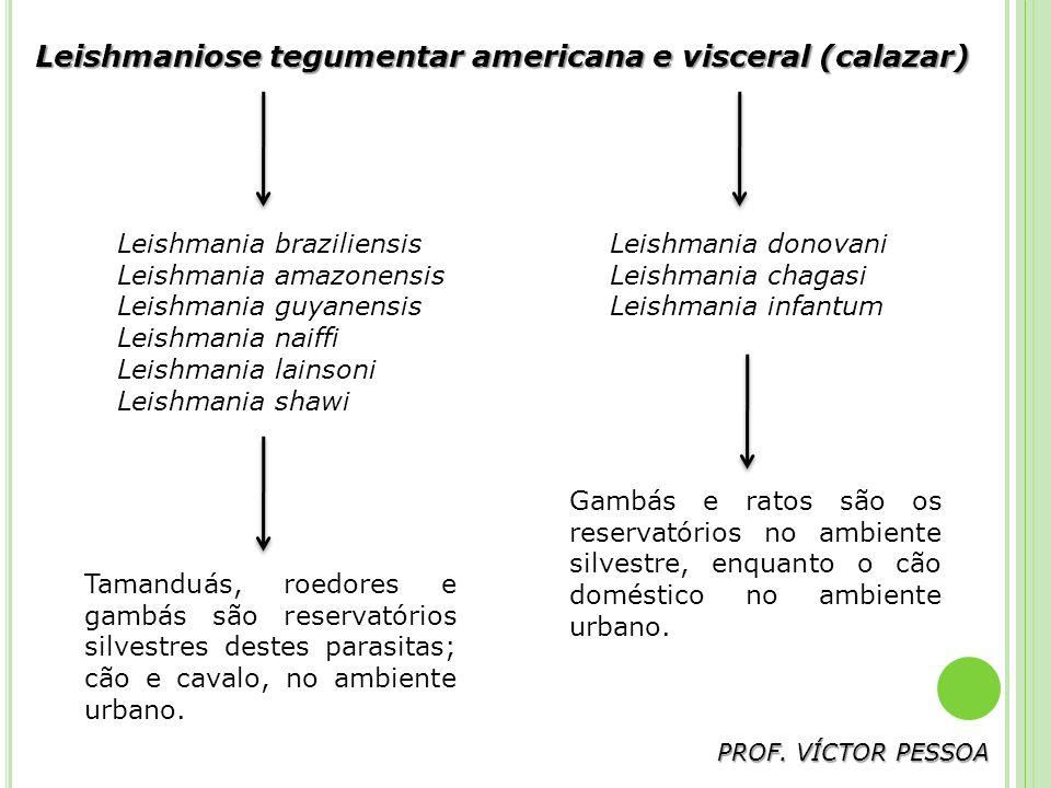 Leishmaniose tegumentar americana e visceral (calazar)