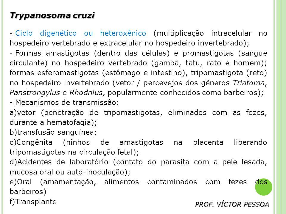 Trypanosoma cruzi Ciclo digenético ou heteroxênico (multiplicação intracelular no hospedeiro vertebrado e extracelular no hospedeiro invertebrado);