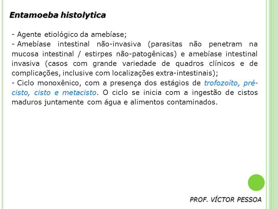 Entamoeba histolytica