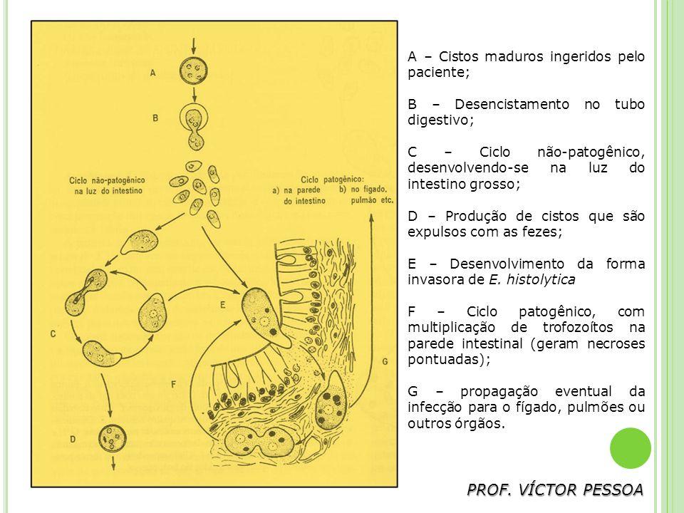PROF. VÍCTOR PESSOA A – Cistos maduros ingeridos pelo paciente;