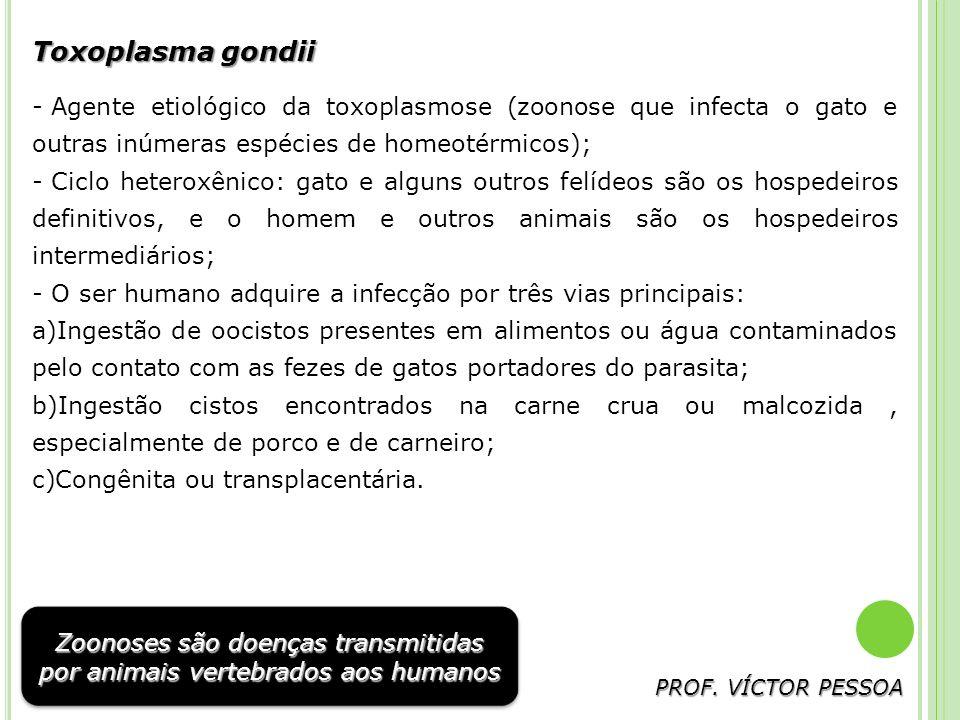 Toxoplasma gondii Agente etiológico da toxoplasmose (zoonose que infecta o gato e outras inúmeras espécies de homeotérmicos);