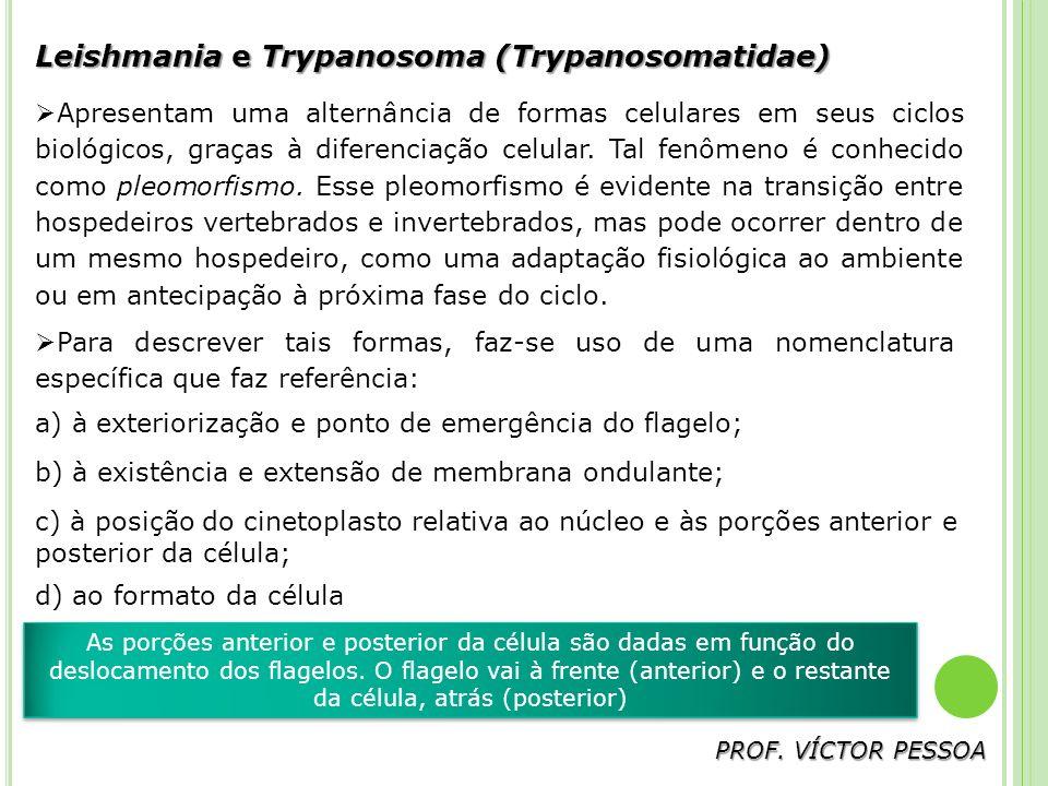 Leishmania e Trypanosoma (Trypanosomatidae)