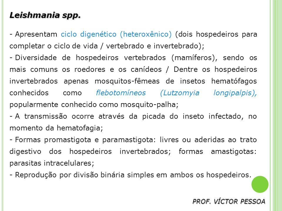 Leishmania spp. Apresentam ciclo digenético (heteroxênico) (dois hospedeiros para completar o ciclo de vida / vertebrado e invertebrado);