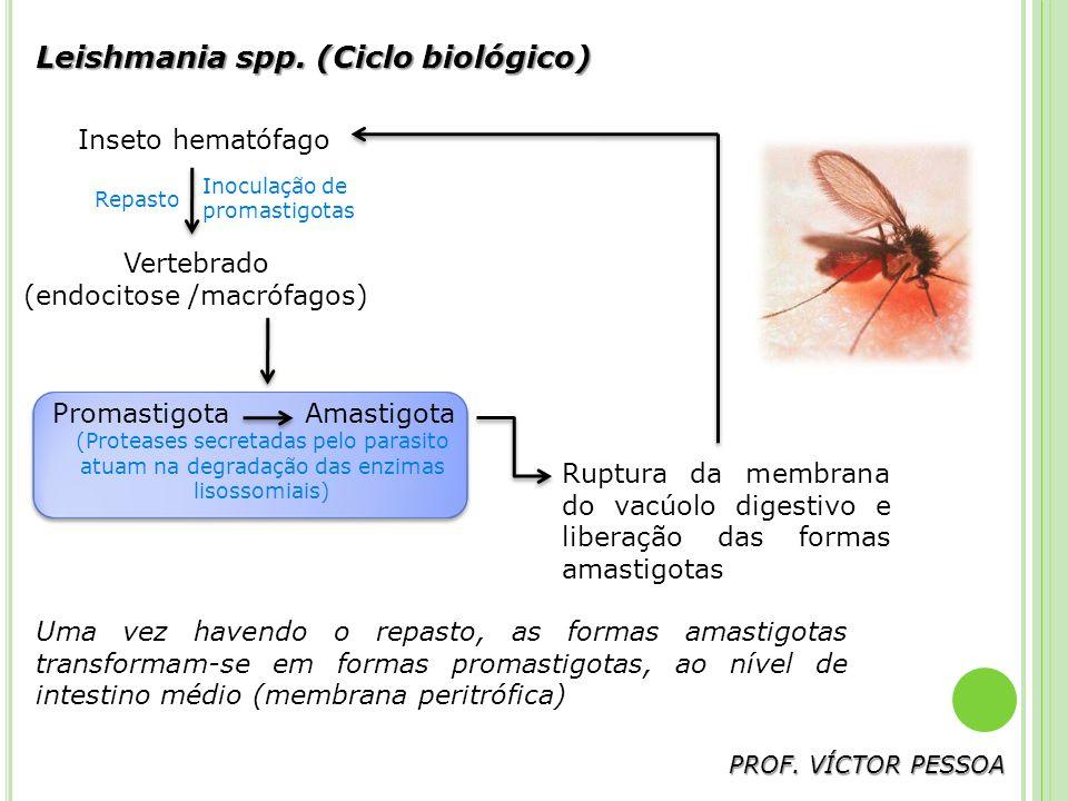 (endocitose /macrófagos)