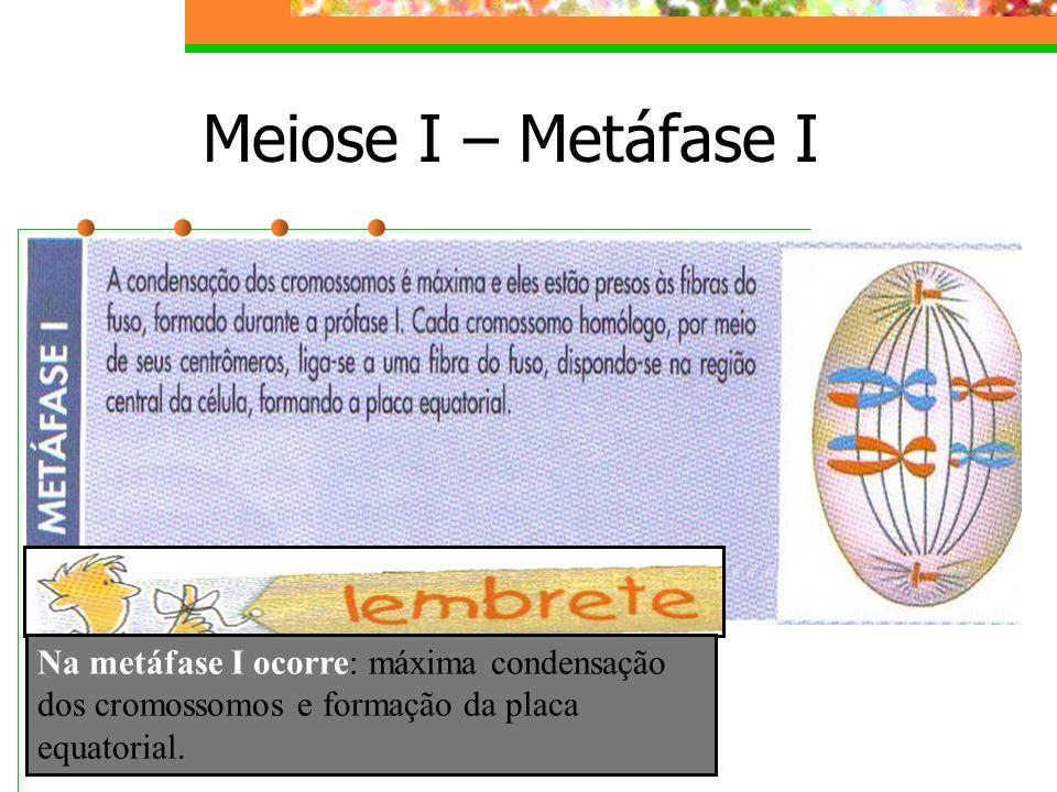 Meiose I – Metáfase I Na metáfase I ocorre: máxima condensação dos cromossomos e formação da placa equatorial.