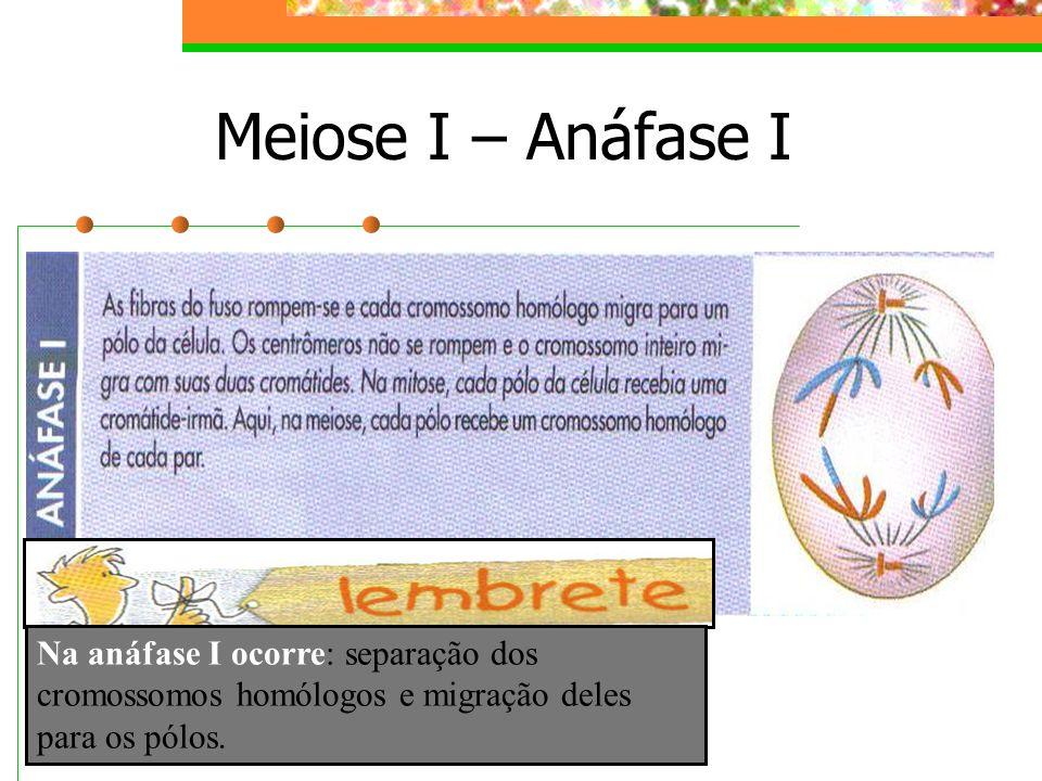Meiose I – Anáfase I Na anáfase I ocorre: separação dos cromossomos homólogos e migração deles para os pólos.