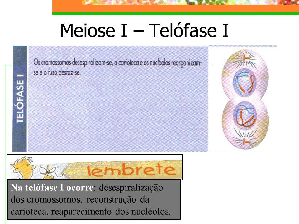 Meiose I – Telófase I Na telófase I ocorre: desespiralização dos cromossomos, reconstrução da carioteca, reaparecimento dos nucléolos.