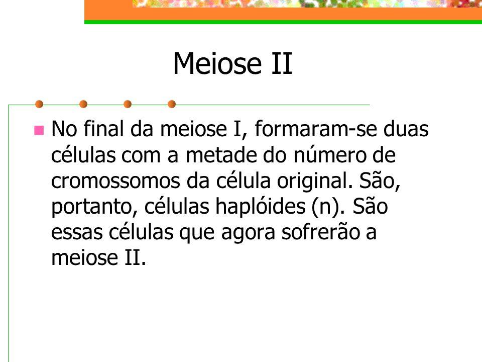 Meiose II
