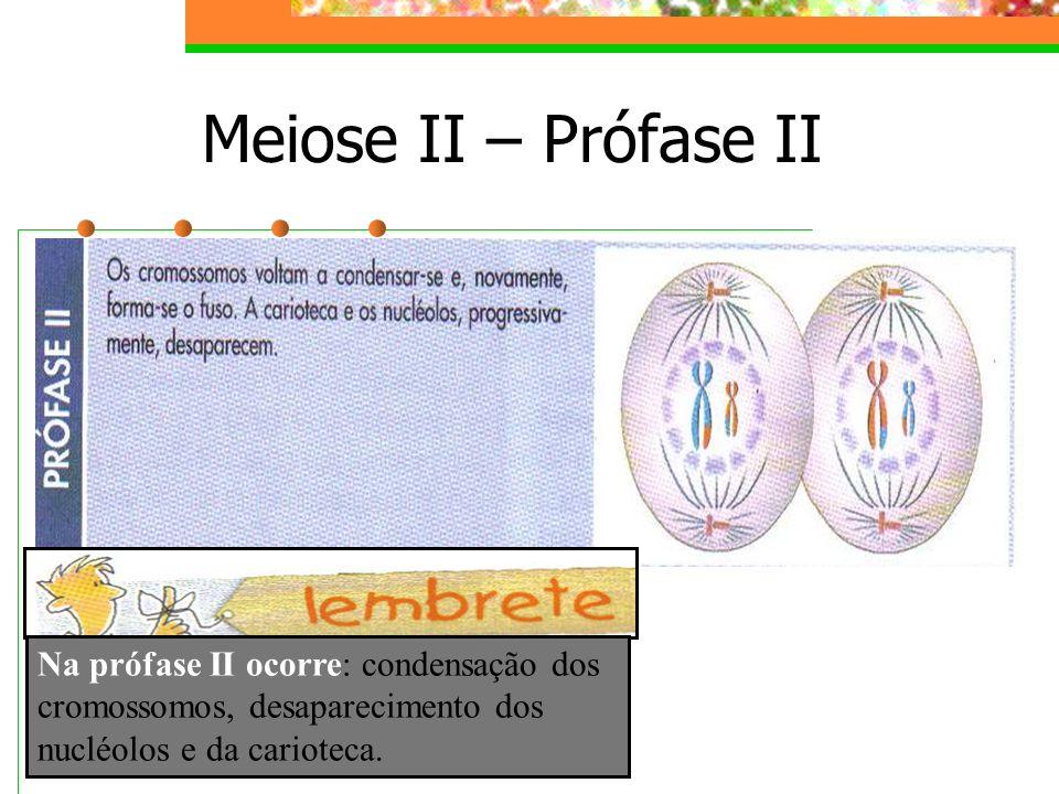 Meiose II – Prófase II Na prófase II ocorre: condensação dos cromossomos, desaparecimento dos nucléolos e da carioteca.