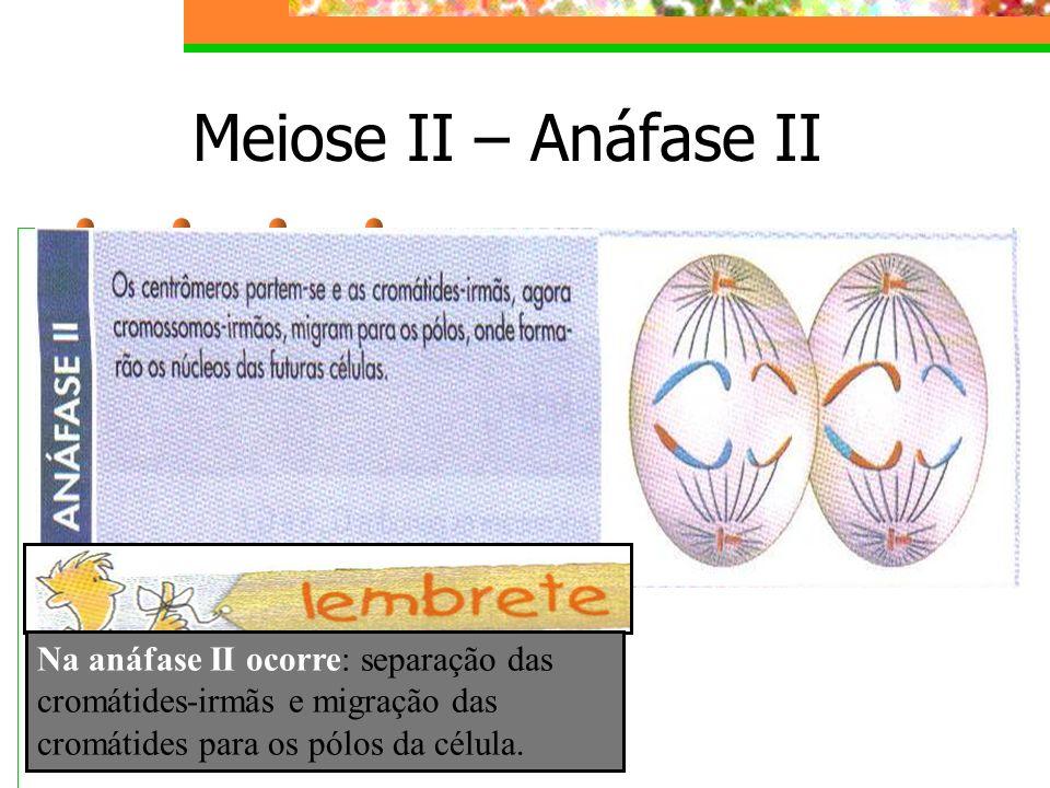 Meiose II – Anáfase II Na anáfase II ocorre: separação das cromátides-irmãs e migração das cromátides para os pólos da célula.