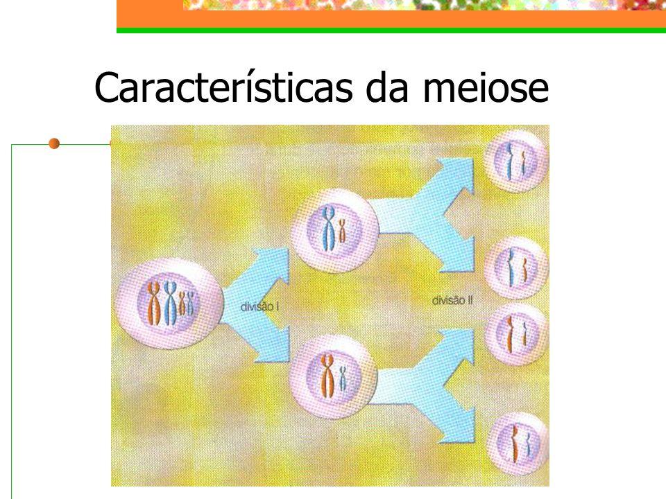 Características da meiose