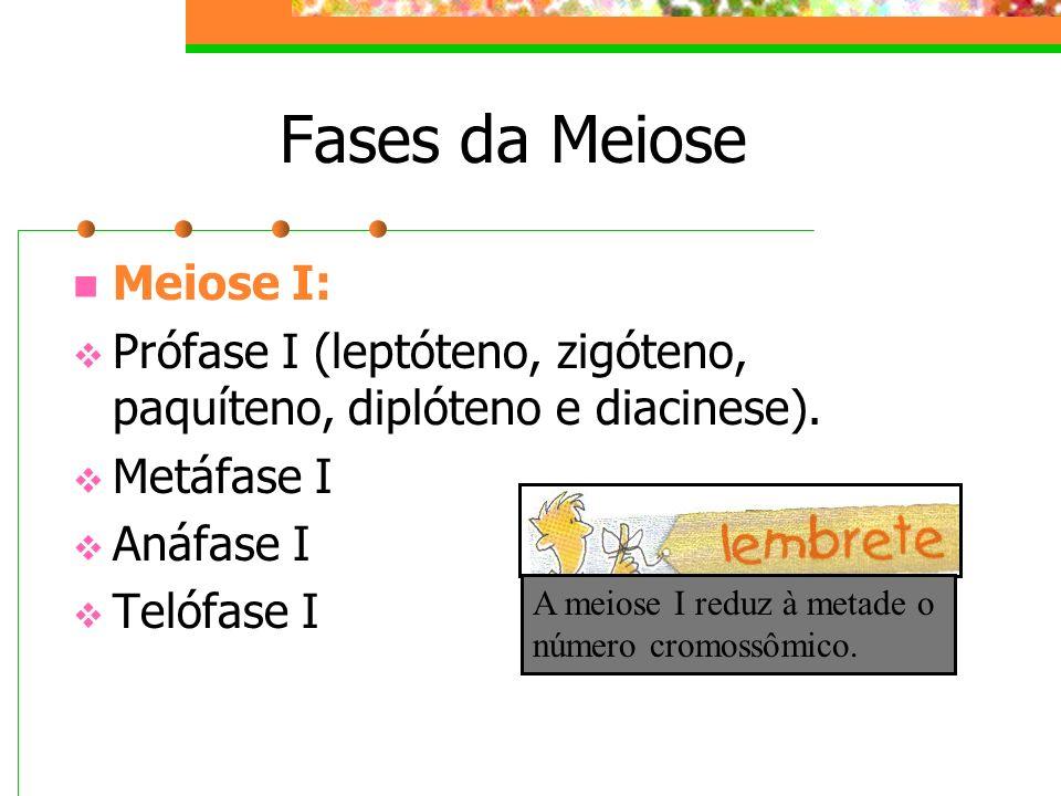 Fases da Meiose Meiose I: