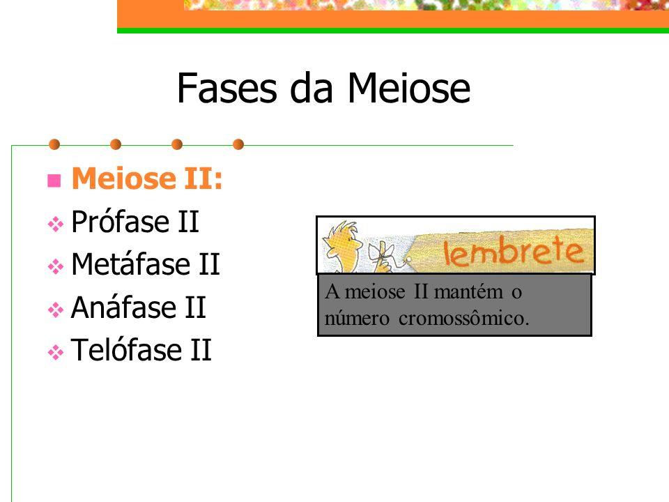 Fases da Meiose Meiose II: Prófase II Metáfase II Anáfase II