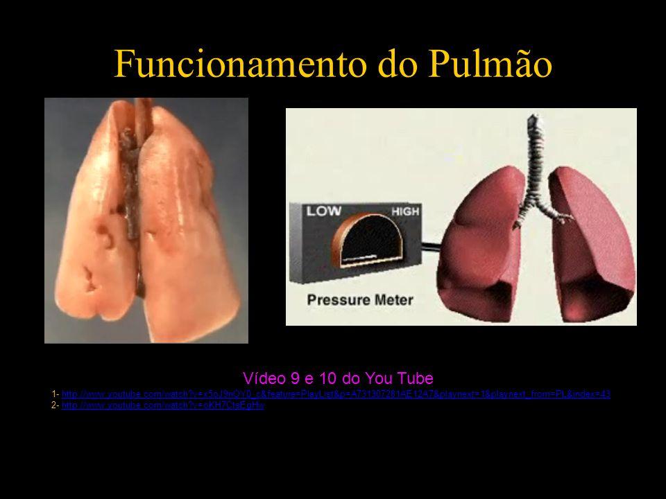 Funcionamento do Pulmão